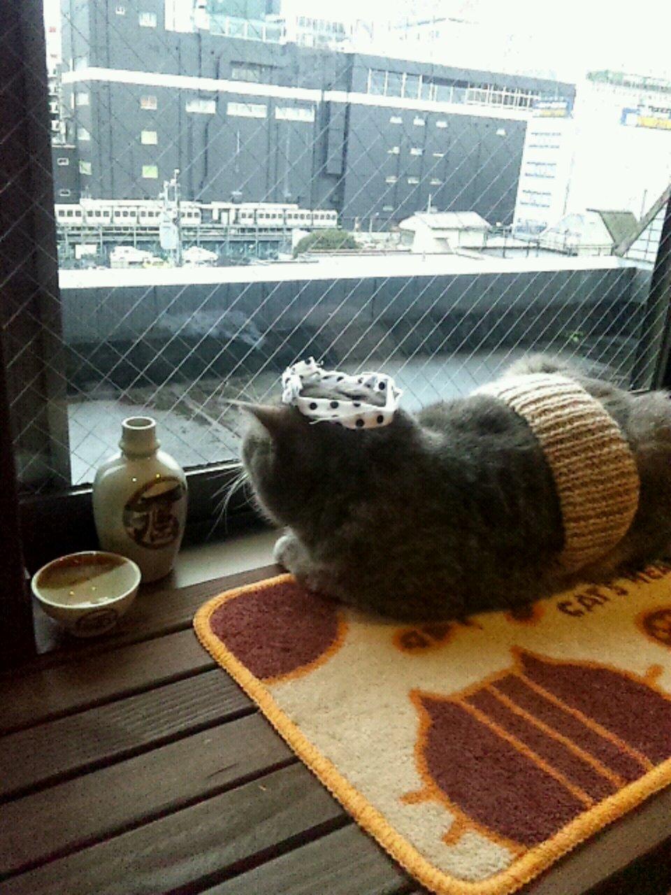 猫カフェにいったよーbyうっちー